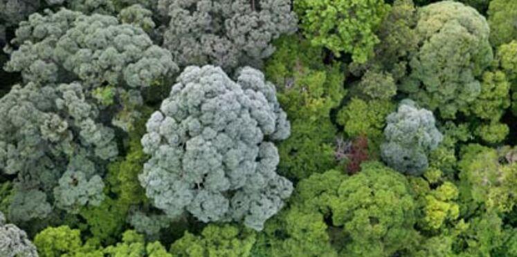 Déforestation : Casino renonce à l'huile de palme dans ses produits