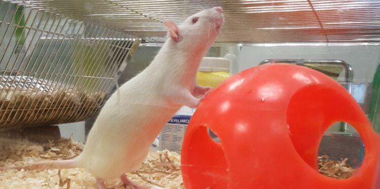 L'interdiction des tests sur les animaux, pour ou contre?