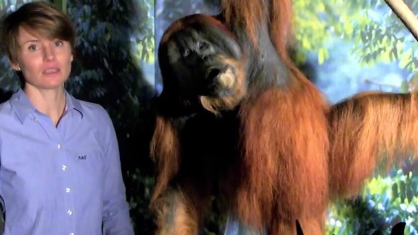 Sabrina Krief, primatologue, se bat pour les grands singes