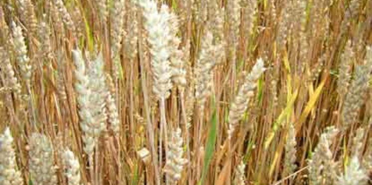 Le texte sur les OGM a été adopté