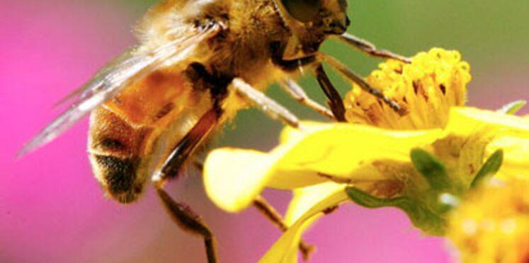 Menace sur les abeilles