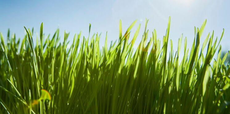 Semaine du développement durable : vive le changement !