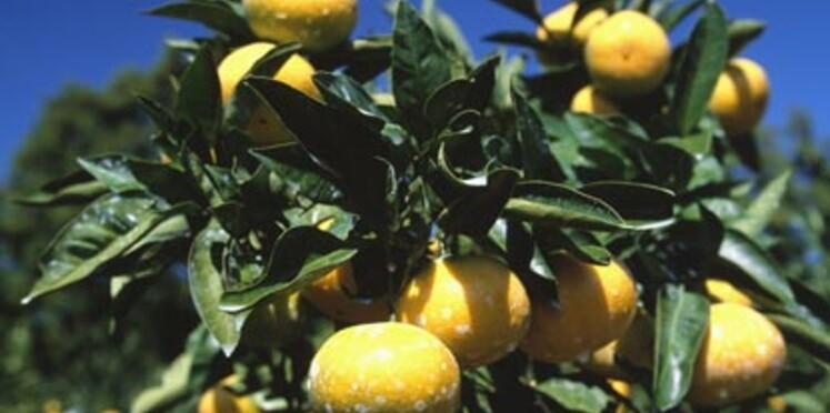 Une semaine sans pesticides du 20 au 30 mars