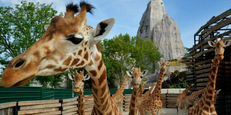 Soigneuse de girafes au zoo de Vincennes