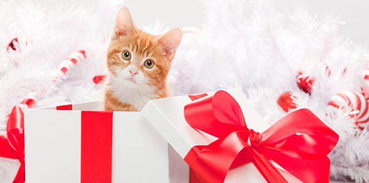 Le top 5 des cadeaux les plus mignons