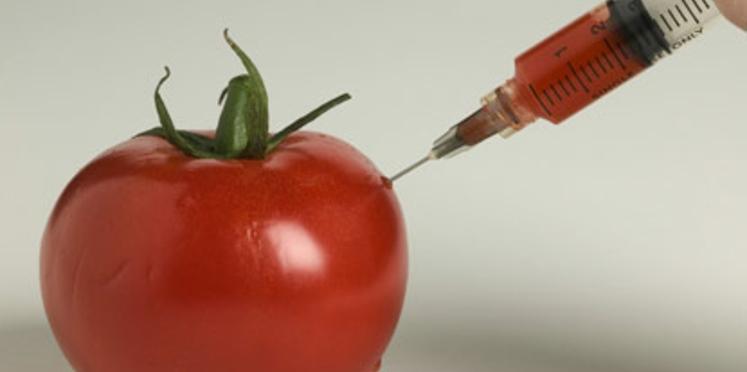 Un pique-nique sans OGM