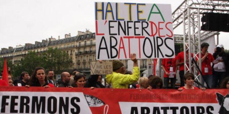 Abattoirs: l'Assemblée nationale dit non à la maltraitance animale