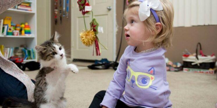 Amputée d'un bras, une fillette reçoit un chaton à trois pattes