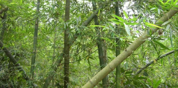 L'année internationale des Forêts lancée officiellement le 24 janvier