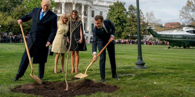 Pourquoi l'arbre offert à Donald Trump par Emmanuel Macron a-t-il disparu?