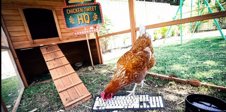 Cette star tweete plus vite que ses plumes, qui est-ce?