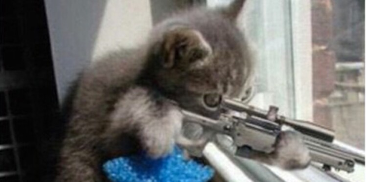 #BrusselsLockdown : des chats pour combattre le terrorisme