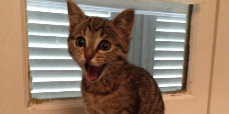 Regardez des vidéos de chats pour lutter contre le cancer (oui, c'est possible !)