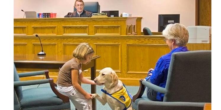 Des chiens pour aider à témoigner au tribunal