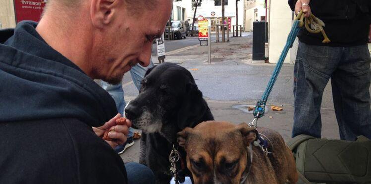 Un ancien SDF crée les Restos du cœur pour chiens