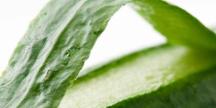 Concombre espagnol : les précautions à prendre
