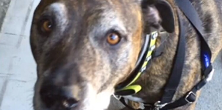 Un chien nommé Dash est confondu avec Daesh et provoque une alerte dans une banque