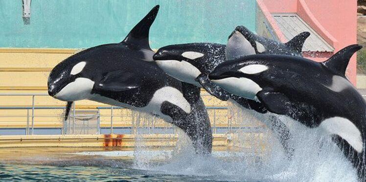 A Marineland, le décès d'une orque crée la polémique