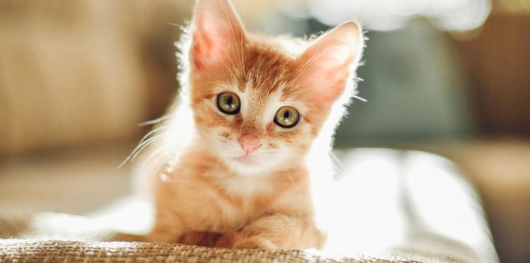 VIDÉO - Fatigué d'être réveillé la nuit par son chat, il se venge de la pire des façons