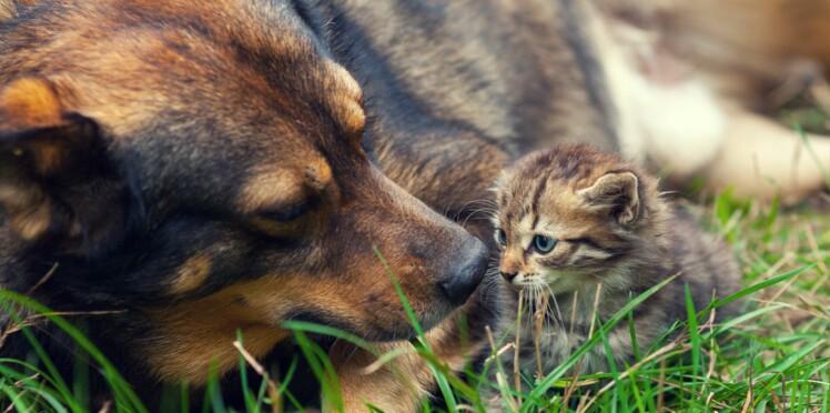 Privé de contrats aidés, un refuge redoute l'euthanasie des animaux