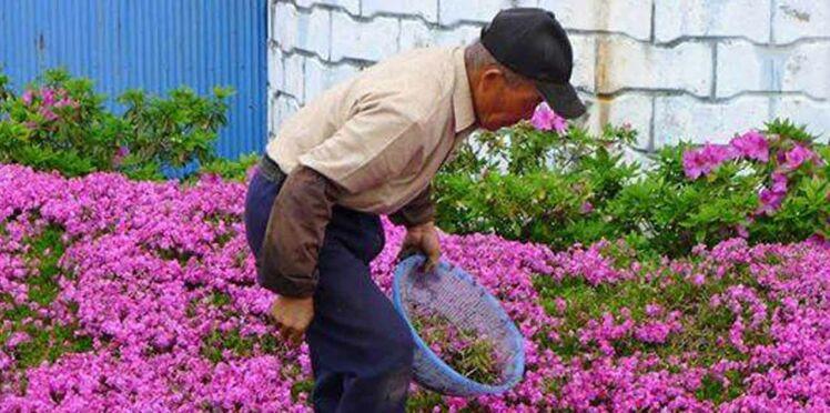 Photos : découvrez celui qui a planté des fleurs durant deux ans pour sa femme aveugle