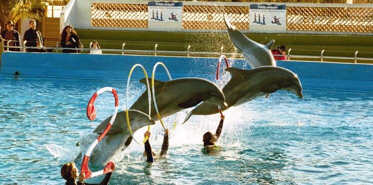 L'interdiction de la reproduction des dauphins en captivité confirmée par le Conseil d'Etat