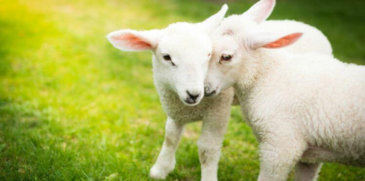 La journée sans viande : agir pour le bien-être animal