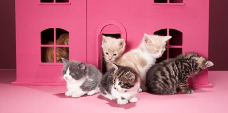 Bientôt un Loft Story pour chats ?