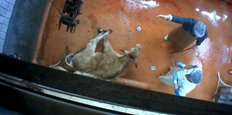 Maltraitance animale : Stéphane Le Foll réclame des sanctions