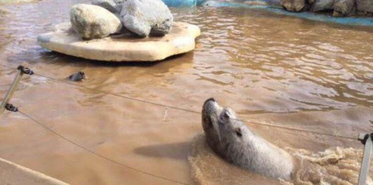 Marineland  d'Antibes : après les intempéries, le parc craint pour ses animaux