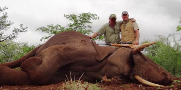 Pascal Olmeta s'explique après sa partie de chasse aux éléphants