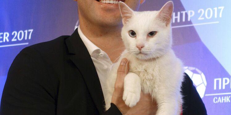 Photos – Découvrez Achille, le chat (blanc et sourd) pronostiqueur du Mondial 2018