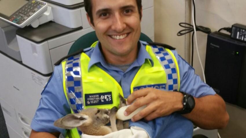Trop mignon: un policier adopte un bébé kangourou