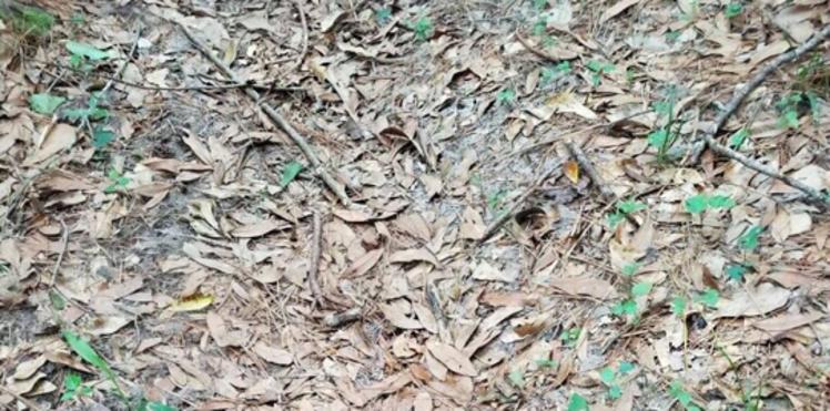 Illusion d'optique : ce cliché où on doit trouver un serpent rend fou les internautes