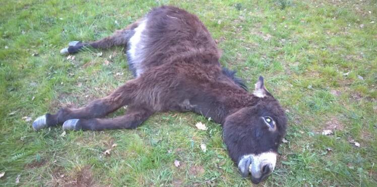 Rhônes : Un âne abattu d'une balle en pleine tête