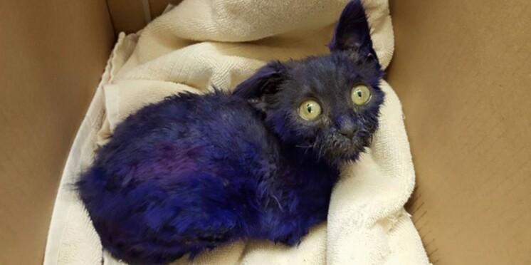 """Smurf, le chaton peint en violet qui servait de """"jouet à mâcher"""""""