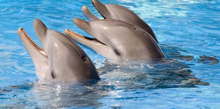 """Scandaleux : trois dauphins """"livrés"""" en avion par Fed Ex"""