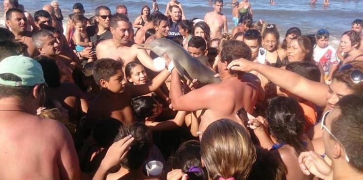 Un bébé dauphin victime de la bêtise humaine