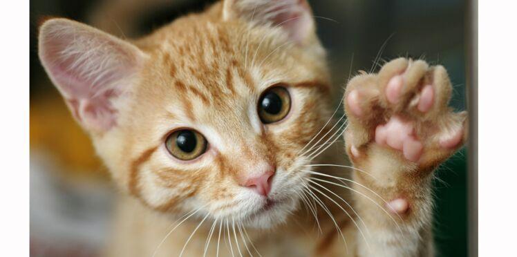 Vidéo - Ce chat adorable utilise le langage des signes pour communiquer avec son maître malentendant