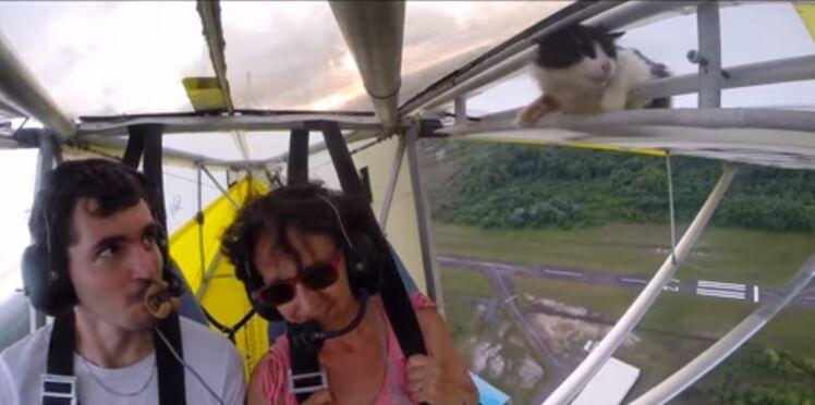 Vidéo incroyable : un chat s'offre un baptême de l'air en ULM !