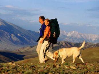 Faire de la randonnée avec son chien : mode d'emploi