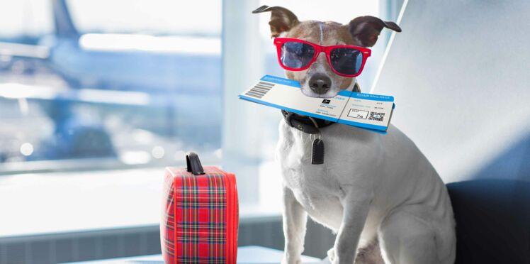 Voyager avec son animal de compagnie : mode d'emploi