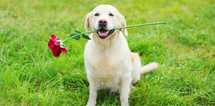 8 preuves d'amour insolites dont on a envie de s'inspirer (ou pas)