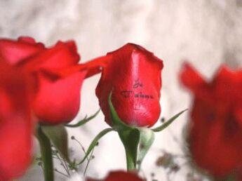 Dites-le sur une fleur