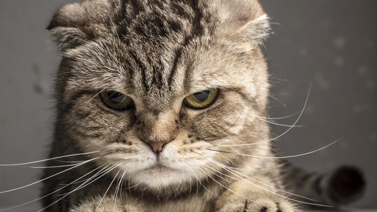 10 trucs à savoir sur les chats