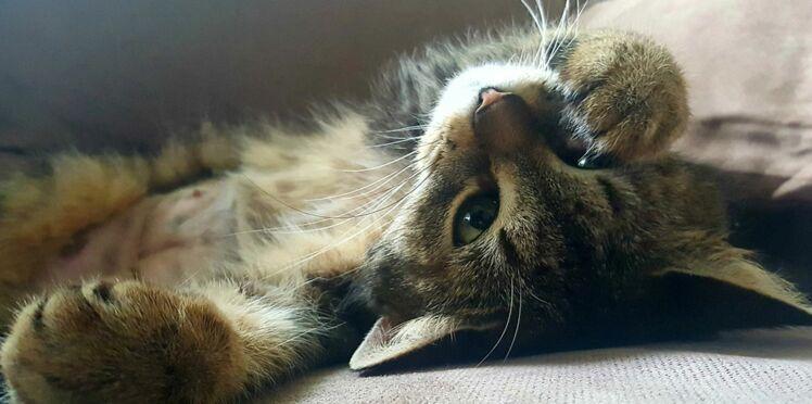 12 nouveautés Made in France pour votre chat