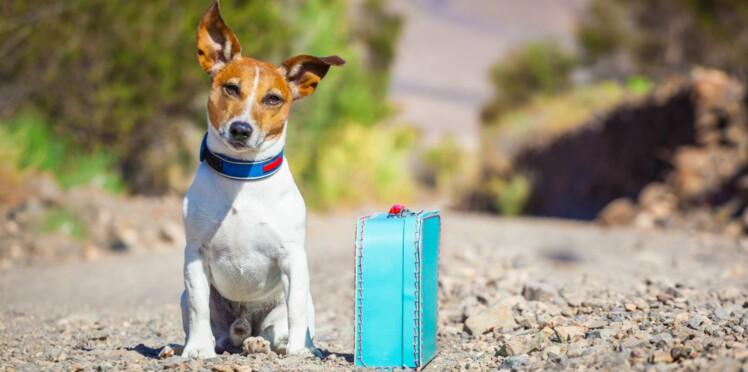 14 sites pour faire garder chien, chat et autres animaux de compagnie