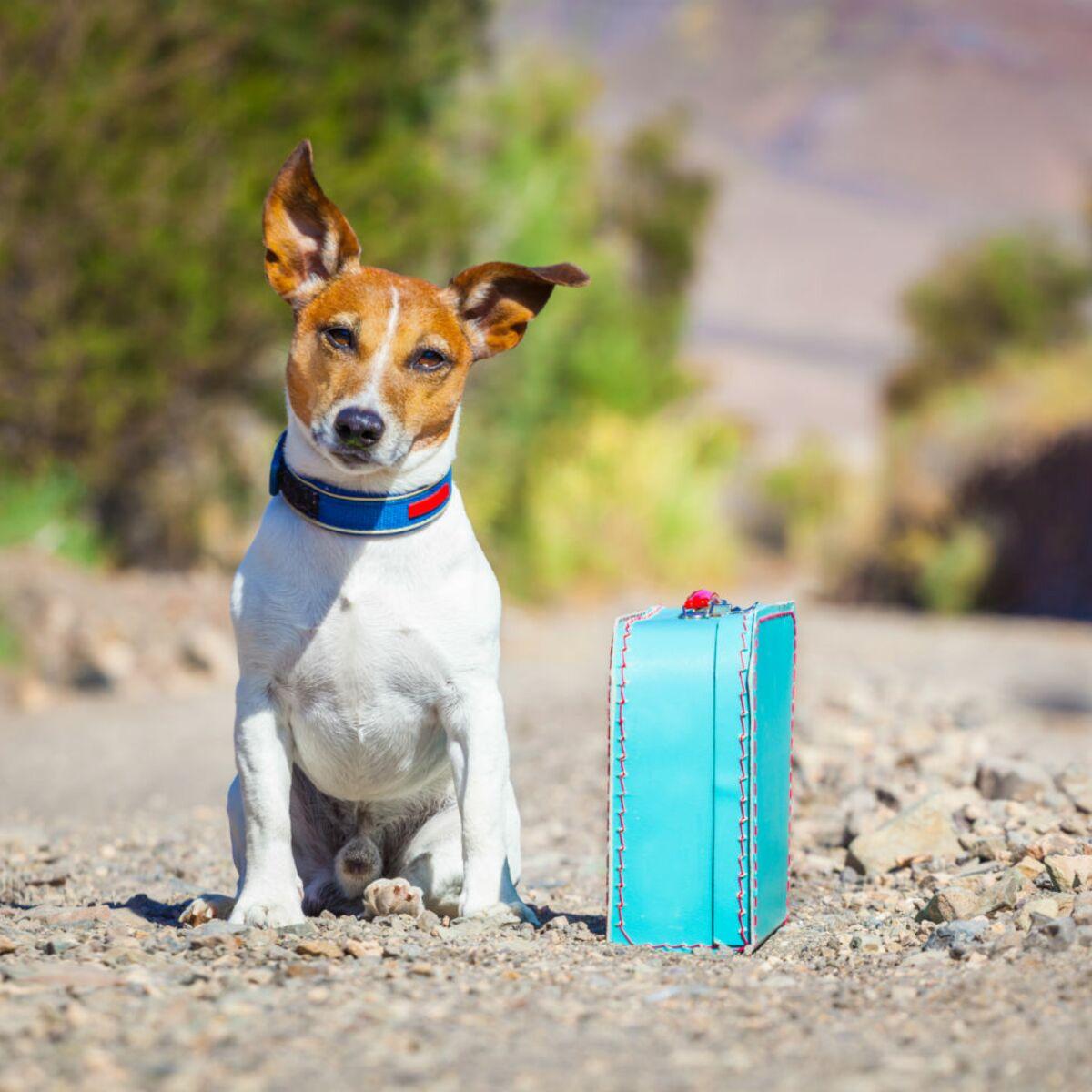 9 sites pour faire garder chien, chat et autres animaux de