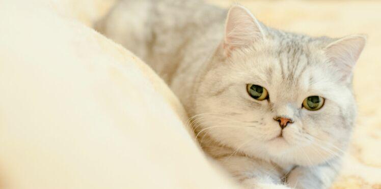 5 infos étonnantes sur les sens du chat