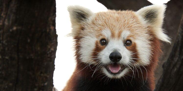5 trucs à savoir sur les animaux mignons